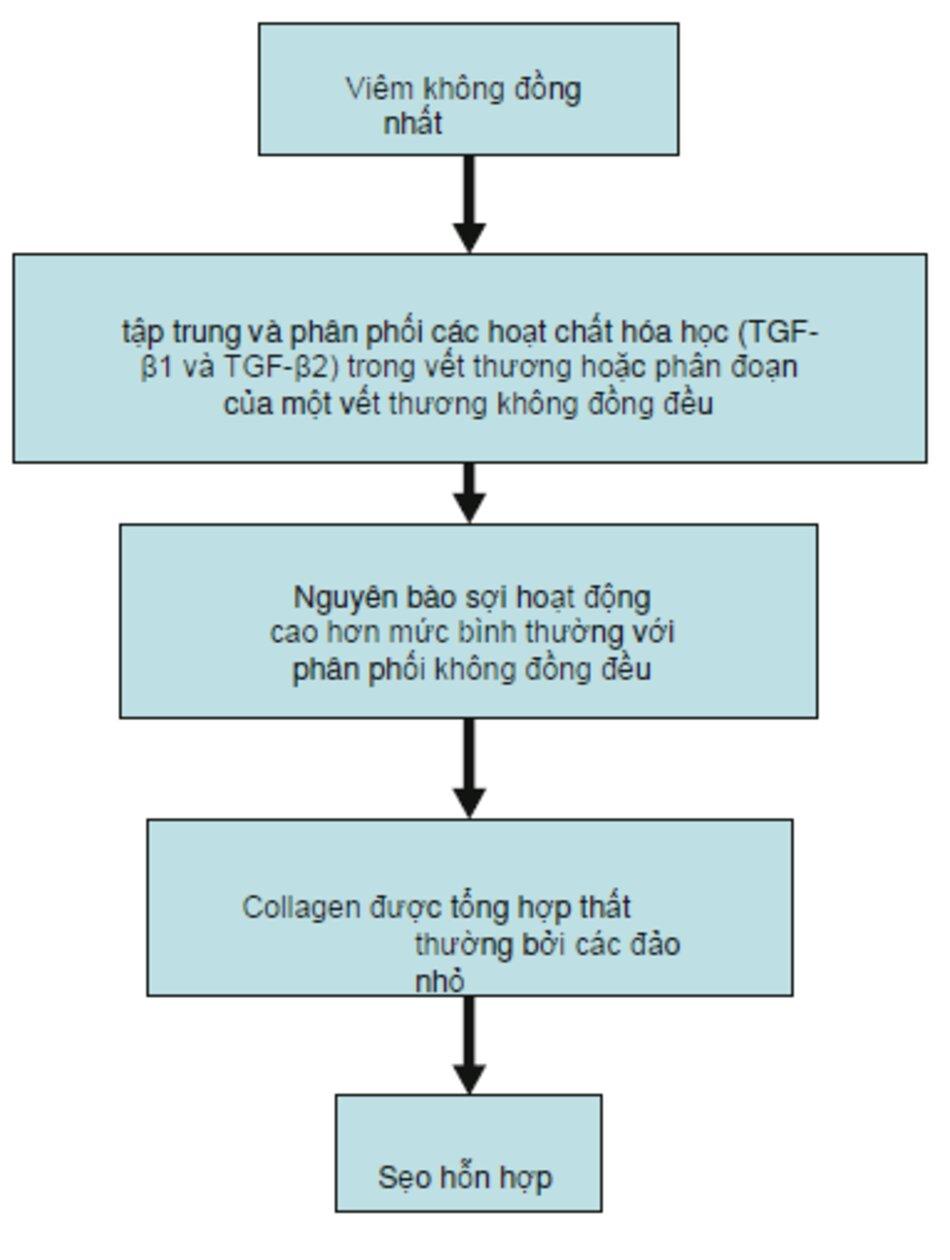 Fig. 4.5 Tầng biểu đồ của sẹo hỗn hợp