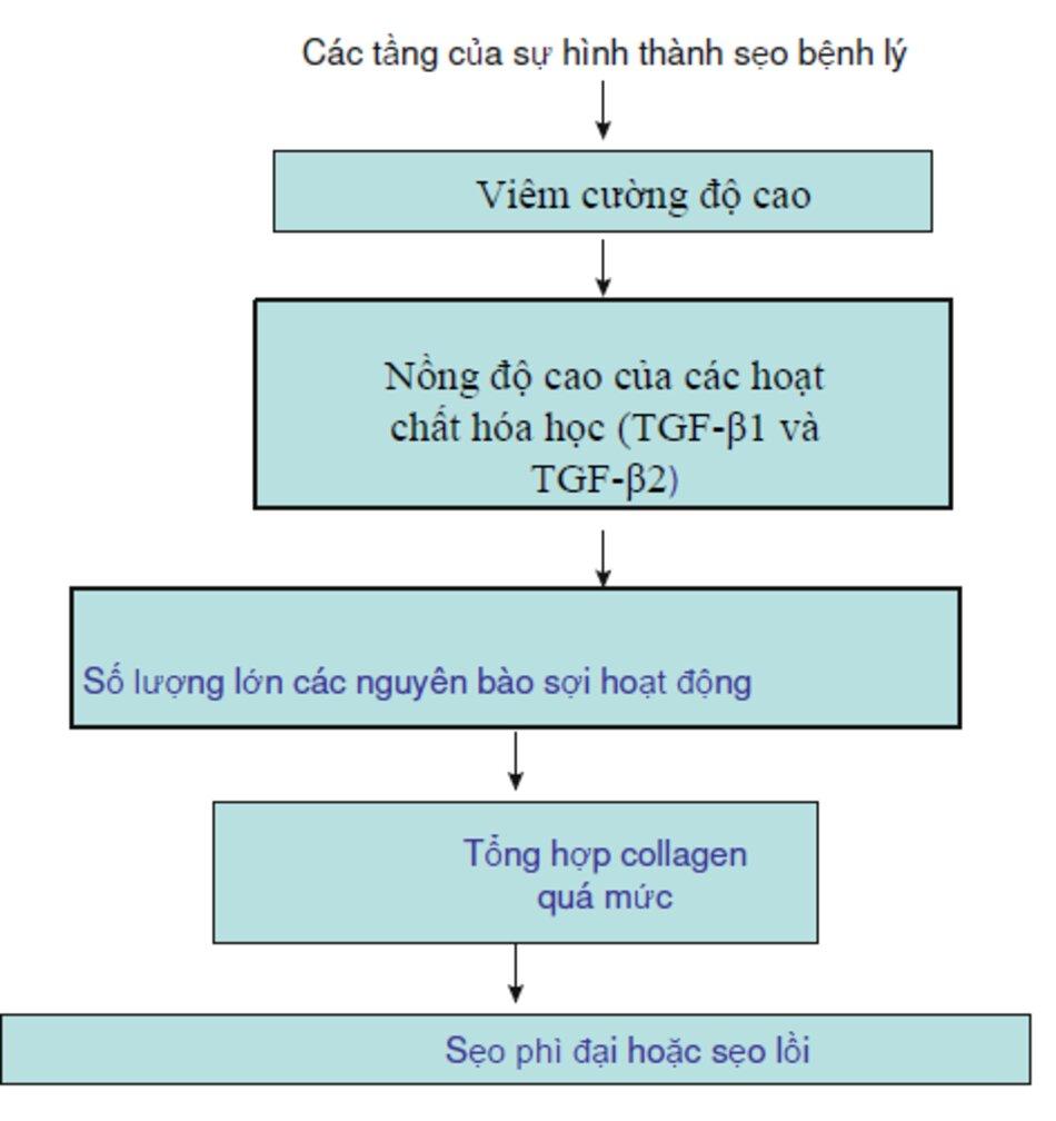 Fig. 2.7 Các tầng của sự hình thành sẹo bệnh lý