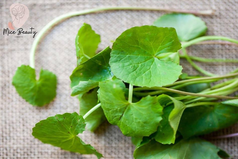 Công thức trị mụn bằng chanh và rau má